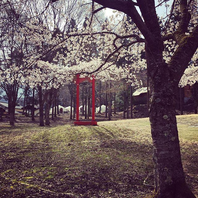 #春 #田舎