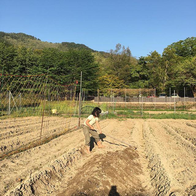 #野菜 #田舎 #農業女子 #田舎暮らし #多々良木