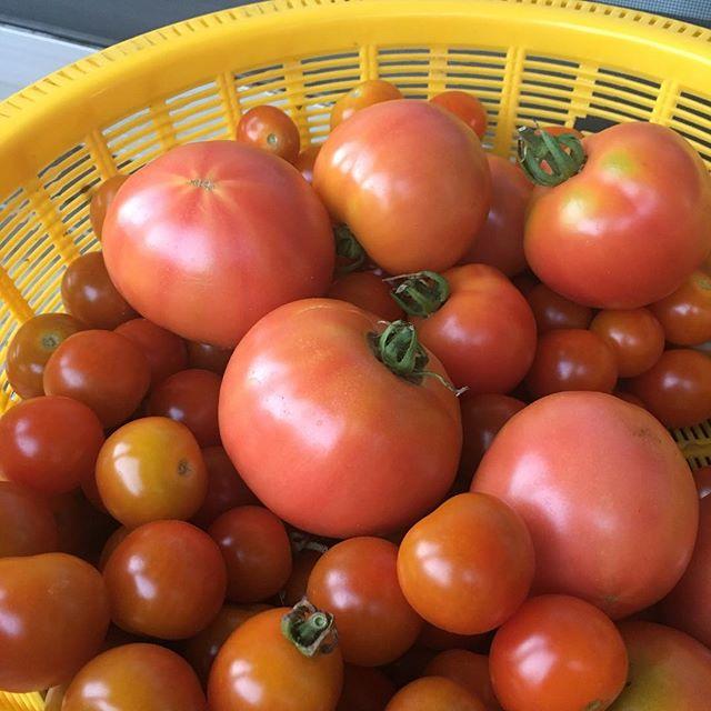 #多々良木 #トマト #あさどれ新鮮