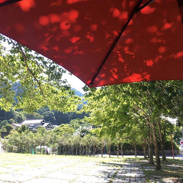 #多々良木 #夏休み #芸術の森 #木漏れ日 #あさご